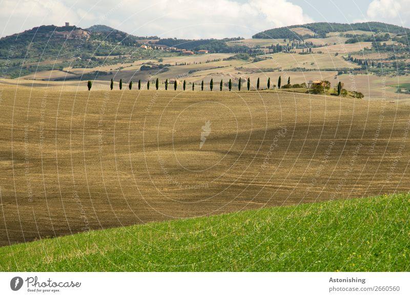 Reihe Umwelt Natur Landschaft Pflanze Sand Himmel Wolken Horizont Sommer Wetter Baum Gras Sträucher Zypresse Wiese Feld Hügel Toskana Italien Haus alt braun