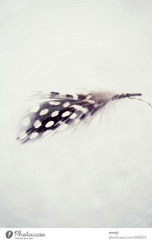 Überbleibsel weiß schwarz Dekoration & Verzierung Feder gepunktet Tier Strukturen & Formen Feste & Feiern