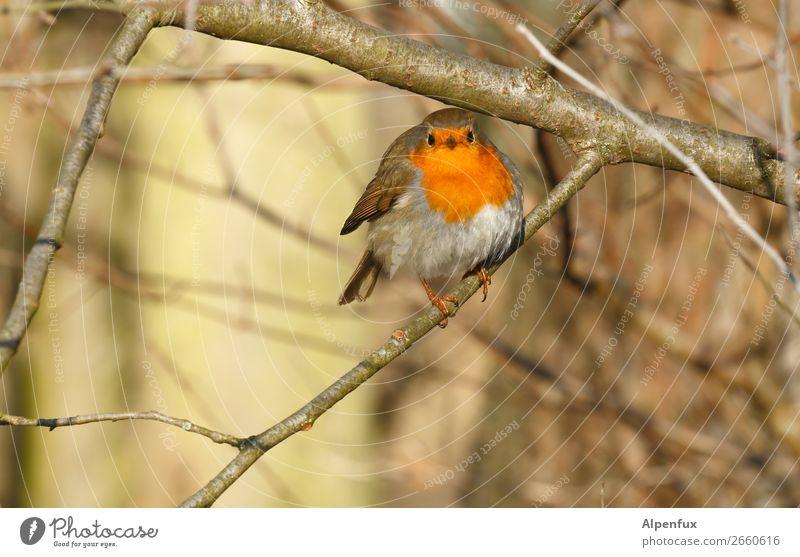 Rundkehlchen Rotkehlchen Vogel Tier Natur Menschenleer Tierporträt Wildtier Außenaufnahme sitzen niedlich Baum Schwache Tiefenschärfe Pflanze Ganzkörperaufnahme