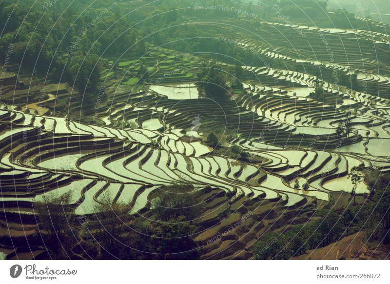 schwimmbad Natur Landschaft Wasser Feld Reisfeld China yuanyang Landwirtschaft Farbfoto Außenaufnahme Kontrast Reflexion & Spiegelung Vogelperspektive