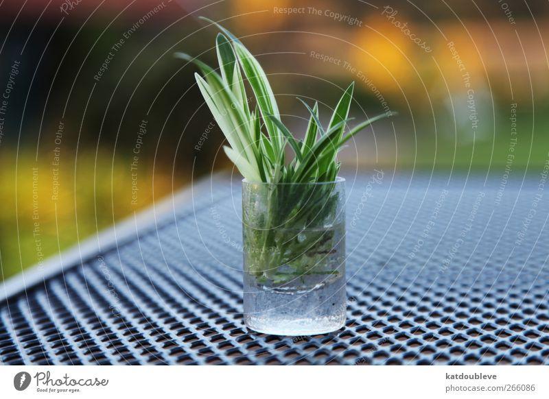 nous avons besoin de soleil grün Pflanze natürlich Wachstum Grünpflanze Wasserglas züchten