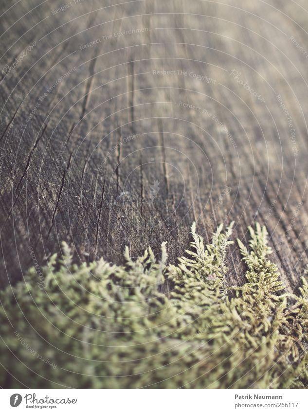 Sterling Moos Natur grün Umwelt Holz Frühling braun