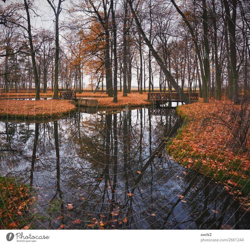 Symmetrischer Park Wasser Baum Blatt ruhig Herbst natürlich Traurigkeit Gras Horizont Insel Idylle Sträucher Schönes Wetter groß Vergänglichkeit