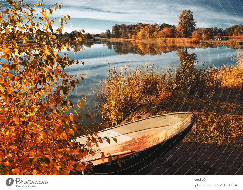 Ausgemustert Umwelt Natur Landschaft Pflanze Himmel Wolken Horizont Herbst Schönes Wetter Baum Gras Sträucher Blatt Seeufer Fischerboot Kahn Metall leuchten alt