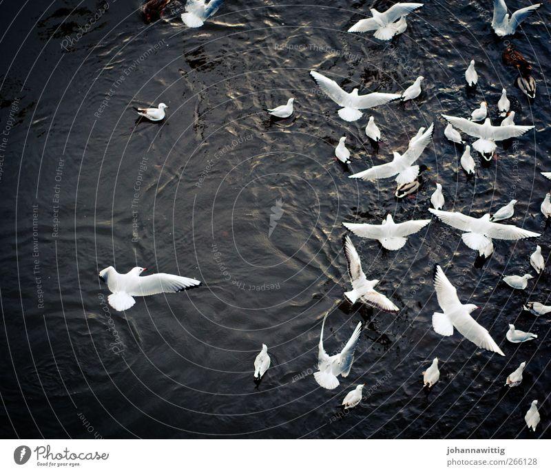 Viel los heute. Wasser Wildtier Vogel Flügel Fell Tiergruppe Schwarm fliegen schön viele wild weiß Farbfoto Außenaufnahme Luftaufnahme Textfreiraum links