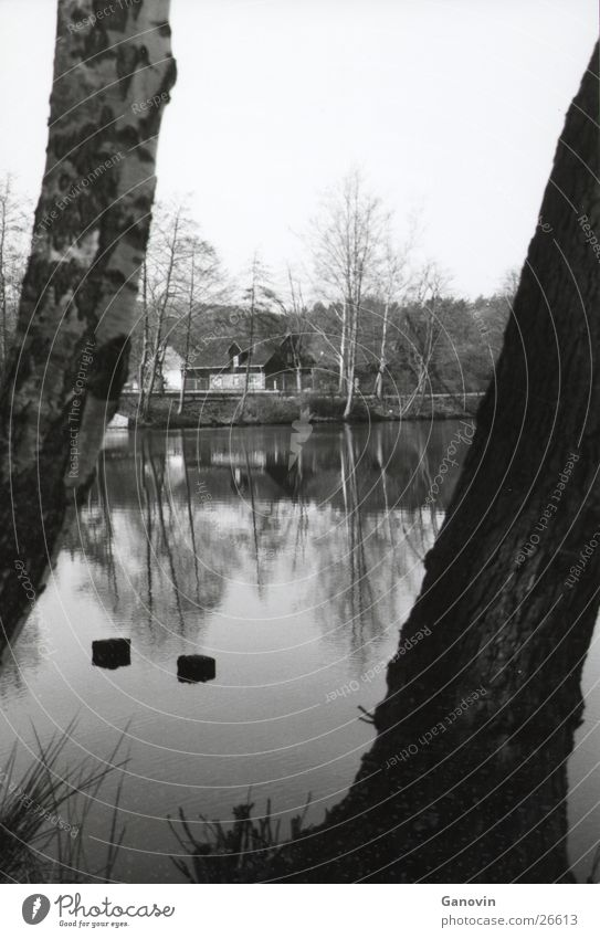 Wasserspiegelung Natur See Perspektive