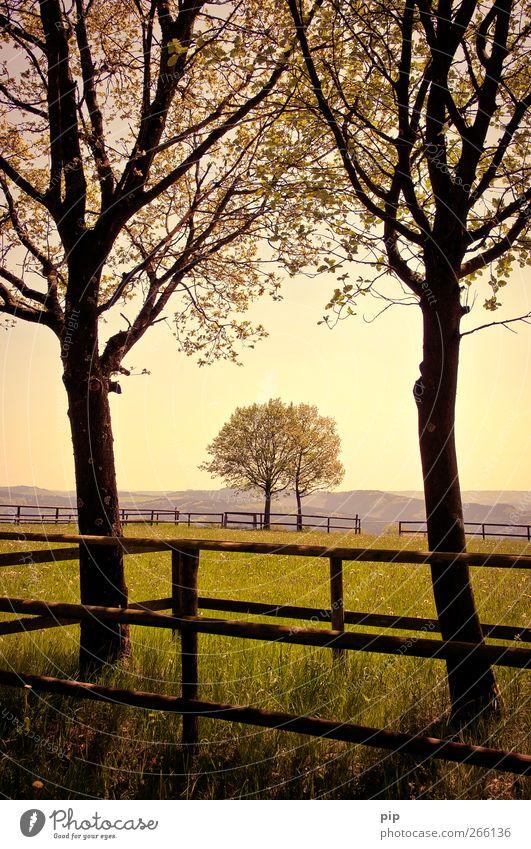 bäume unter sich Natur Baum Sommer Blatt ruhig Ferne Landschaft Wiese Gras Horizont paarweise Trauer Hügel Schönes Wetter Zaun Zusammenhalt