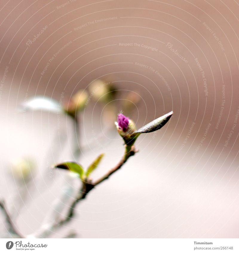 ...verhalten, irgendwie grün Pflanze Blatt Gefühle Blüte ästhetisch Wachstum Vergänglichkeit einfach violett Blühend Blütenknospen Vorfreude
