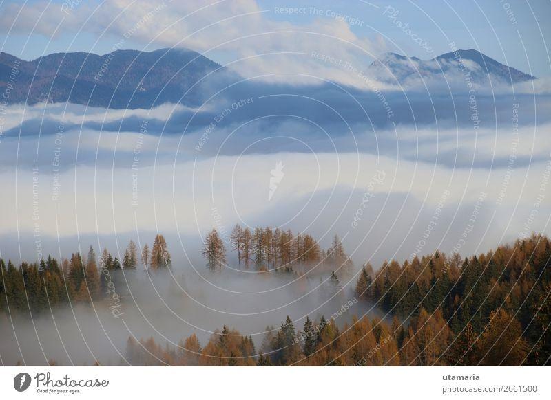 Dichter Nebel über dem Tal, im Spätherbst. Österreich. Berge u. Gebirge wandern Wintersport Klettern Bergsteigen Skifahren Natur Landschaft Pflanze Wolken