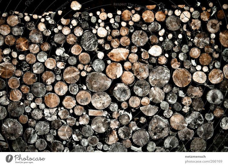 Holzstapel Umwelt Natur Baum alt trocknen trocken Brennholz Farbfoto Gedeckte Farben Außenaufnahme Tag Licht Kontrast Zentralperspektive