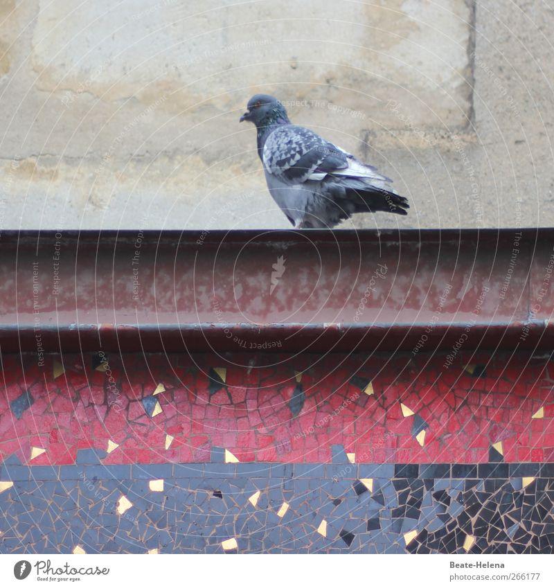 Pariser Taubenschlag Natur blau schön rot ruhig Tier schwarz Wand Herbst Mauer grau Stein Fassade Metall Häusliches Leben warten