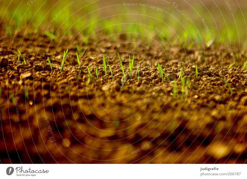Acker Natur grün Pflanze Umwelt Frühling braun Wachstum Landwirtschaft Forstwirtschaft Nutzpflanze