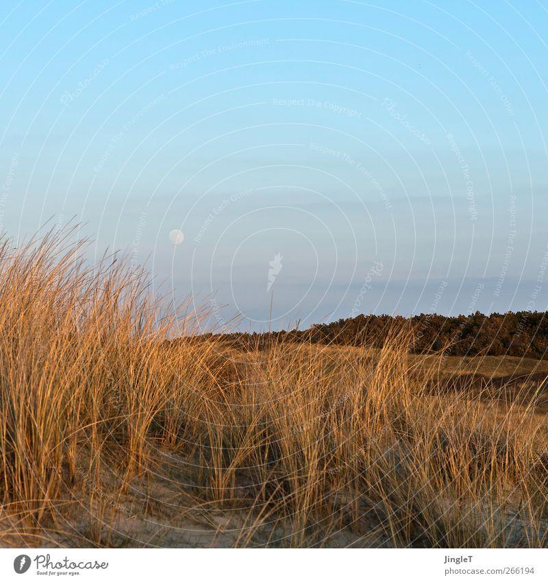 early moon Ferien & Urlaub & Reisen Freiheit Strand Insel Umwelt Natur Landschaft Pflanze Sand Himmel Mond Frühling Schönes Wetter Gras Dünengras Nordsee