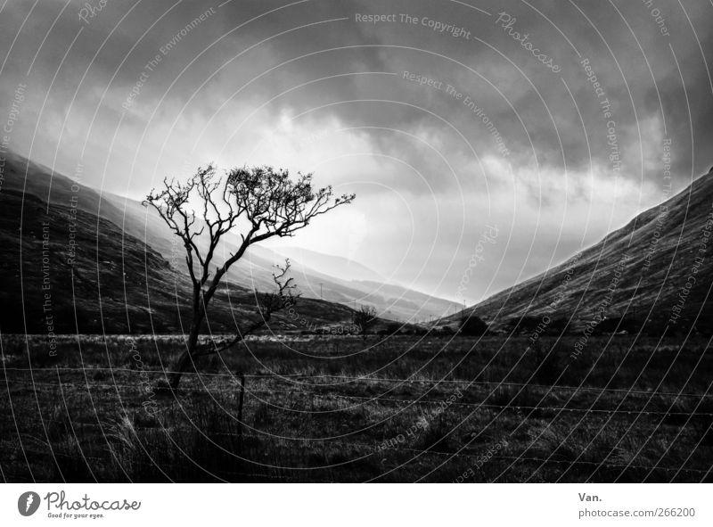 Unidentified Light Landschaft Pflanze Himmel Wolken Sonne Baum Gras Wiese Hügel Berge u. Gebirge bedrohlich kalt grau schwarz weiß Zaun Schwarzweißfoto