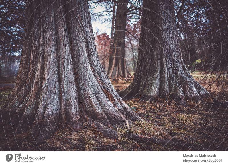 Bigfoot Umwelt Natur Landschaft Pflanze Herbst Baum Park außergewöhnlich braun einzigartig Ewigkeit Frieden Farbfoto Gedeckte Farben Außenaufnahme Dämmerung