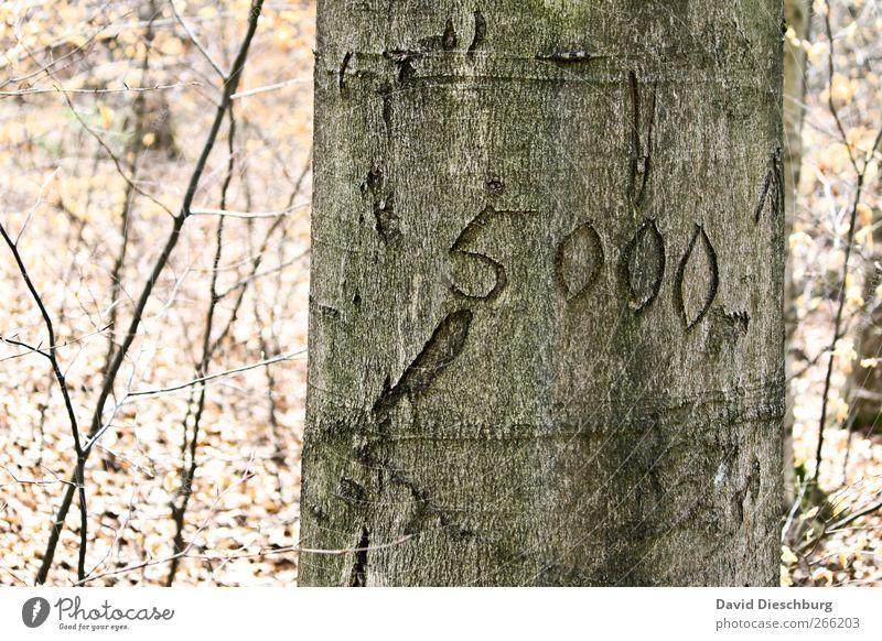 Volkszählung Natur Pflanze Herbst Baum Wald Holz Zeichen Ziffern & Zahlen 5000 Bestandsaufnahme Baumrinde Baumstamm geschnitzt hell zählen Farbfoto