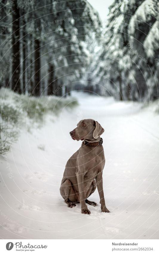 Winterspaziergang Ferien & Urlaub & Reisen Ausflug Freiheit Winterurlaub Natur Landschaft Klima Wetter Eis Frost Schnee Baum Wald Wege & Pfade Tier Haustier
