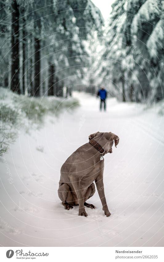 Wer stört? Ausflug Winter Schnee Winterurlaub wandern Wintersport Skifahren Mensch Natur Landschaft Klima Eis Frost Baum Wald Straße Wege & Pfade Tier Haustier