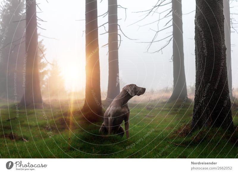 Im Nebelwald Jagd Ausflug Freiheit wandern Natur Landschaft Urelemente Regen Baum Gras Moos Wald Haustier Hund beobachten Spielen ästhetisch Freundlichkeit