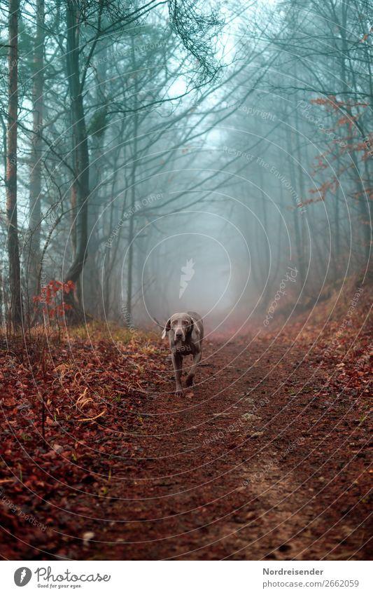 Überraschung | jetzt gibt es ein Leckerli Natur Hund blau Landschaft Baum Tier ruhig Wald Straße Herbst Wege & Pfade braun Ausflug Regen wandern Nebel