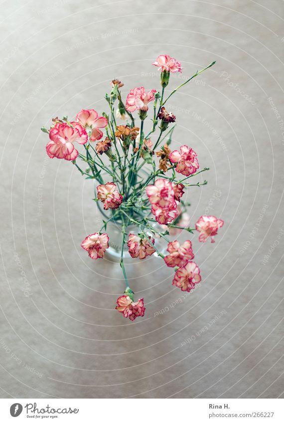 Rosen Tulpen Nelken rot Blume Frühling hell authentisch Vergänglichkeit Stillleben welk Vase verblüht Nelkengewächse