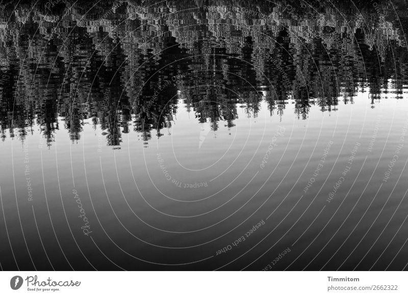 Still ruht der See Umwelt Natur Pflanze Urelemente Wasser Wald grau schwarz weiß Gefühle Erholung ruhig Reflexion & Spiegelung sanft Schwarzweißfoto