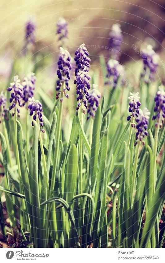 Hallo Frühling! Natur blau grün schön Pflanze Blume Blatt Frühling Blüte Garten braun träumen natürlich Park leuchten frisch