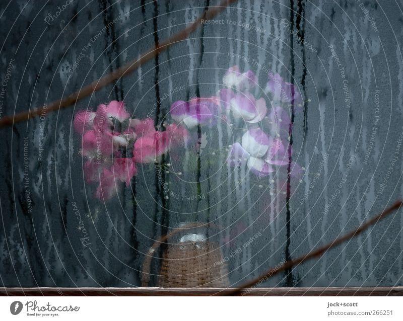 Stille Blumen schön Winter Fenster Blüte Linie Lifestyle träumen Eis Häusliches Leben elegant Zufriedenheit Dekoration & Verzierung leuchten Glas ästhetisch