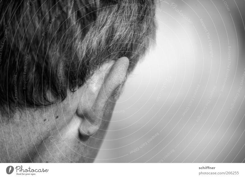 Lauscher auf! Mensch maskulin Mann Erwachsene Haut Haare & Frisuren Ohr Angst hören Hals Rückansicht Hinterkopf Leberfleck Schwarzweißfoto Außenaufnahme