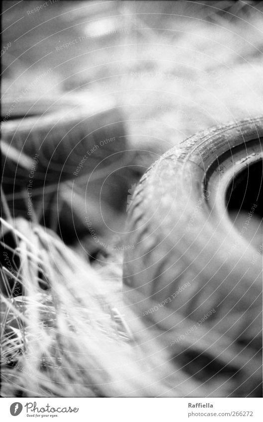versteckte welt II Natur Pflanze Gras warten Reifenprofil abgelegen wegwerfen