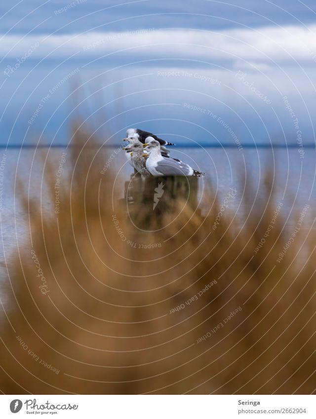 Aufgereiht Tier Wildtier Vogel Tiergesicht Flügel Tiergruppe fliegen Möwe Möwenvögel Lachmöwe Wasser Farbfoto Gedeckte Farben mehrfarbig Außenaufnahme