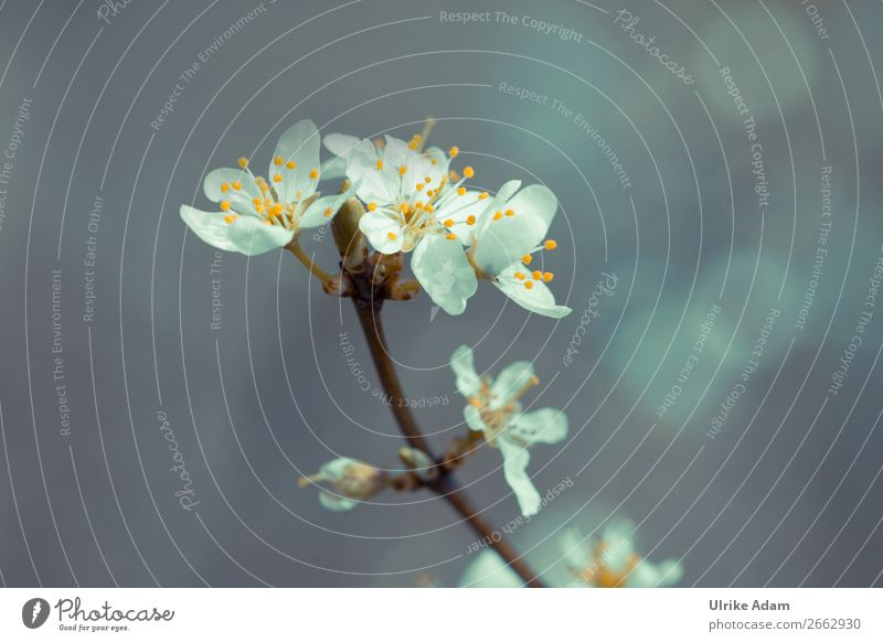 Frühling Natur Pflanze weiß Baum Erholung Blüte Garten grau Design Dekoration & Verzierung Park Blühend Hoffnung Ostern weich