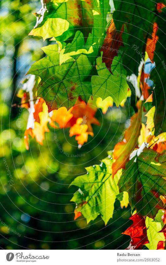 Gelbe und orange Herbstbaumblätter in der Herbstsaison Garten Umwelt Natur Landschaft Pflanze Schönes Wetter Baum Blume Blatt Park Wald schön natürlich braun