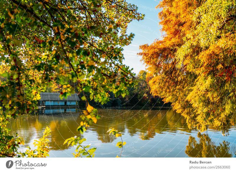 Seehaus umgeben von bunten Fallbäumen im Herbst Ferien & Urlaub & Reisen Sommer Häusliches Leben Haus Garten Umwelt Natur Landschaft Wasser Schönes Wetter Baum