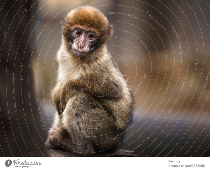 Wo ist meine Mutti Tier Wildtier Tiergesicht Fell Pfote Zoo 1 Tierjunges Blick Traurigkeit Äffchen Affen Farbfoto Gedeckte Farben mehrfarbig Außenaufnahme