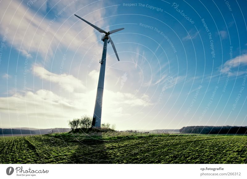 Stromernte Landschaft Pflanze Himmel Sonne Frühling Sommer Herbst Schönes Wetter Nutzpflanze nachhaltig Umweltschutz Windkraftanlage Ackerbau Feld Morgen Tag