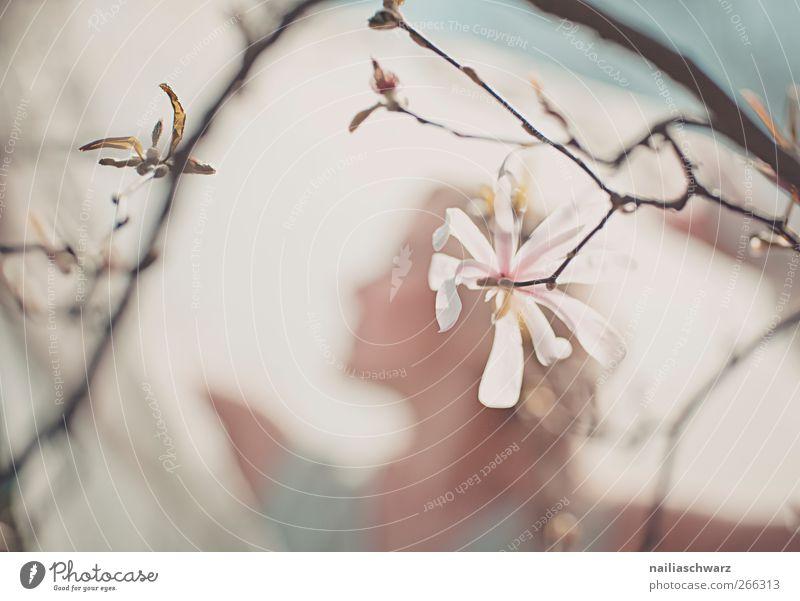 Frühling Mensch feminin Frau Erwachsene Kopf 1 Kunst Natur Pflanze Luft Baum Blume Blüte Grünpflanze Magnolienbaum Kleid Schmuck blond Zopf Blühend Duft Glück