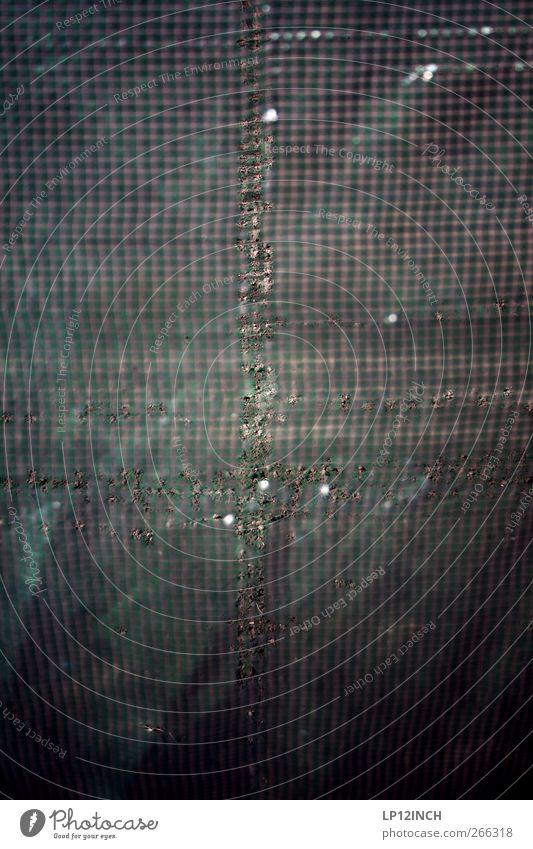 + Erde Nutzpflanze Garten Feld Arbeit & Erwerbstätigkeit Wärme anbauen Gewächshaus Folie Loch Riss Abdeckung Schutz Farbfoto Außenaufnahme Menschenleer Tag