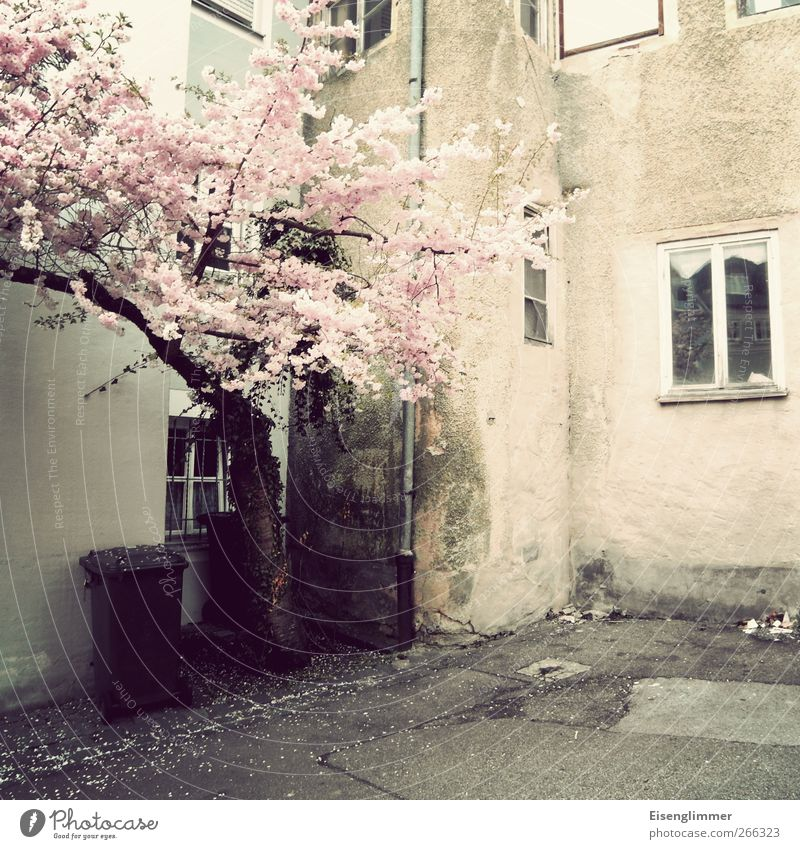 Frühling in Bayern alt Stadt Baum Haus Fenster Wand Mauer Gebäude rosa dreckig Armut Europa retro Bauwerk Bundesadler Altstadt