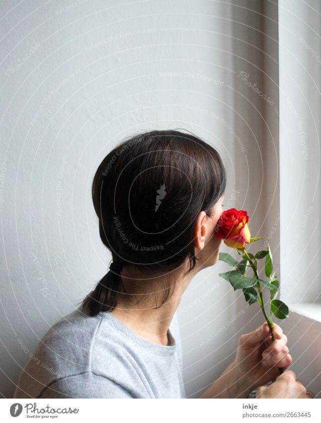 Rose 2 Frau Natur schön weiß rot Freude Erwachsene Liebe natürlich Glück orange grau hell frisch authentisch Freundlichkeit