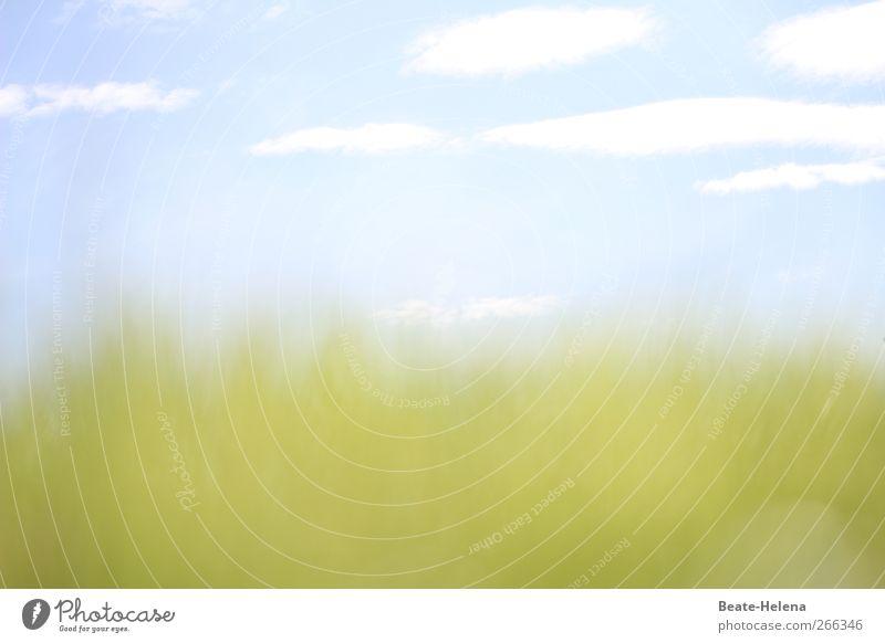 Dem Licht entgegen Himmel Natur blau weiß grün schön Pflanze Sommer Wolken ruhig Erholung Umwelt Wiese Wege & Pfade Frühling Horizont