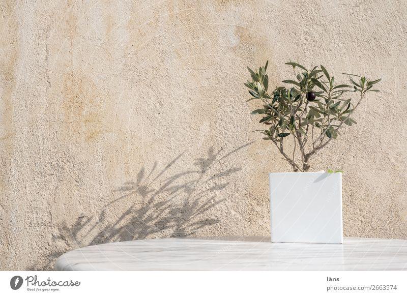 Olive Ferien & Urlaub & Reisen Tourismus Mauer Wand Fassade stehen einfach Optimismus Überleben Santorin Oliven Olivenbaum Außenaufnahme Menschenleer