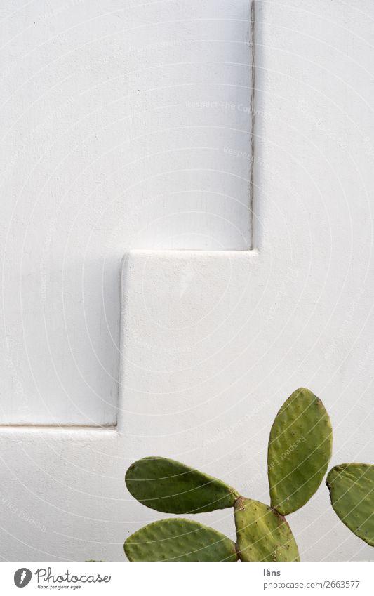 Stufe Häusliches Leben Haus Insel Santorin Mauer Wand Treppe Fassade Wachstum Überleben Kaktus Farbfoto Außenaufnahme Menschenleer Textfreiraum links