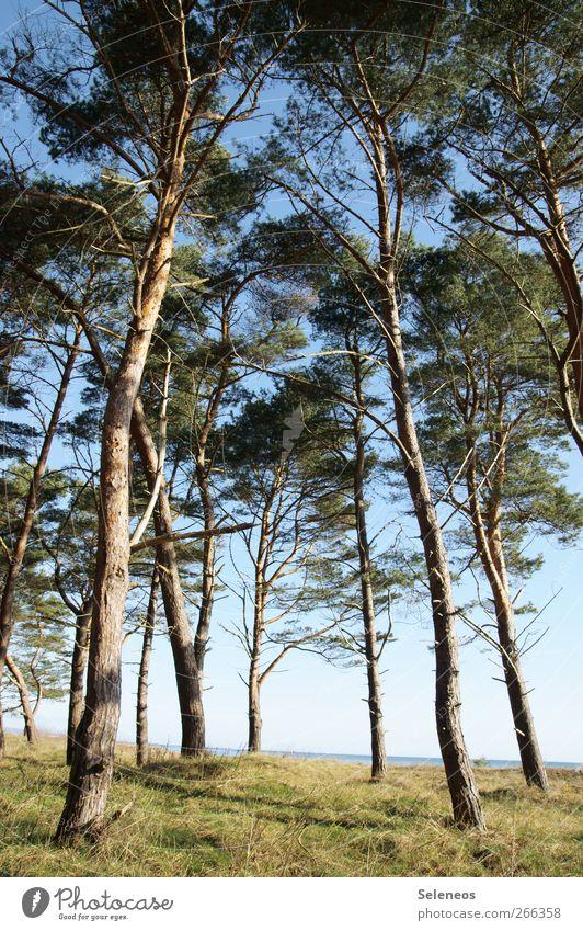 behind there Himmel Natur Wasser Baum Ferien & Urlaub & Reisen Pflanze Sonne Meer Sommer Strand Ferne Umwelt Landschaft oben Freiheit Frühling