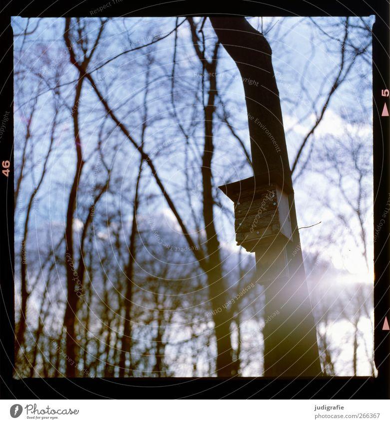 Baumhaus Umwelt Natur Landschaft Pflanze Himmel Winter Klima Garten Park Wald kalt Schutz Umweltschutz Nistkasten Häusliches Leben Farbfoto Außenaufnahme