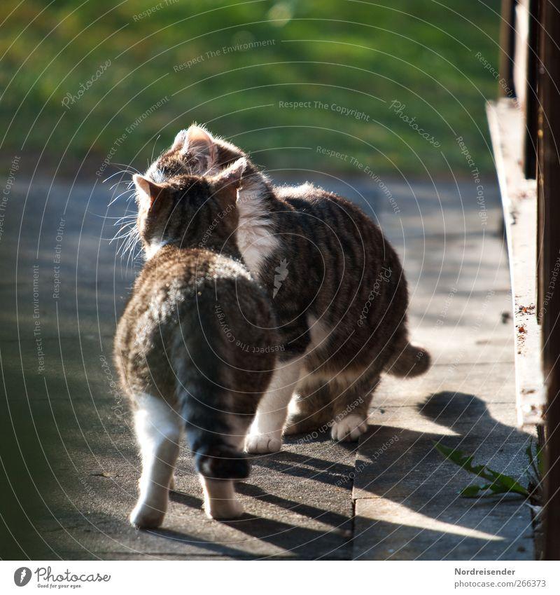 Mal wieder reden... Frühling Schönes Wetter Wege & Pfade Tier Haustier Katze 2 Beton Beratung berühren Kommunizieren Neugier Zufriedenheit Frühlingsgefühle