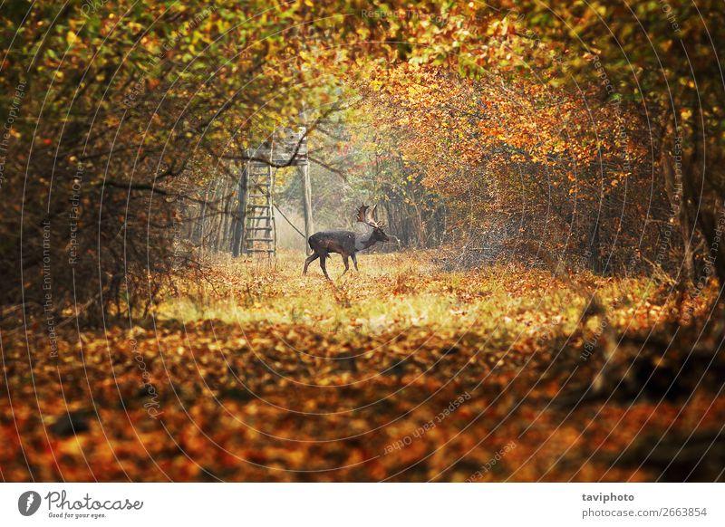 Natur Mann Farbe schön grün Landschaft Tier Wald Straße Erwachsene Herbst Umwelt natürlich Wege & Pfade Spielen braun