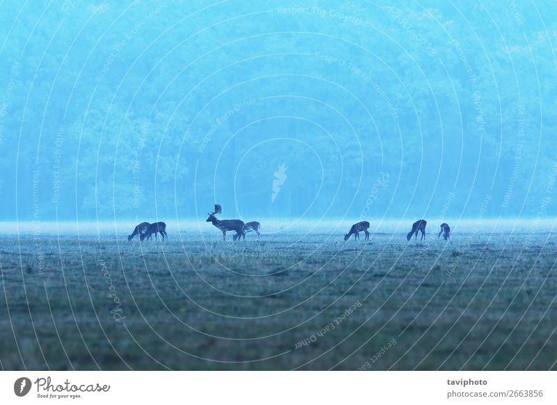 Frau Natur Mann Landschaft Tier Wald Erwachsene Herbst Wiese Gras Menschengruppe braun wild Park Nebel Baby