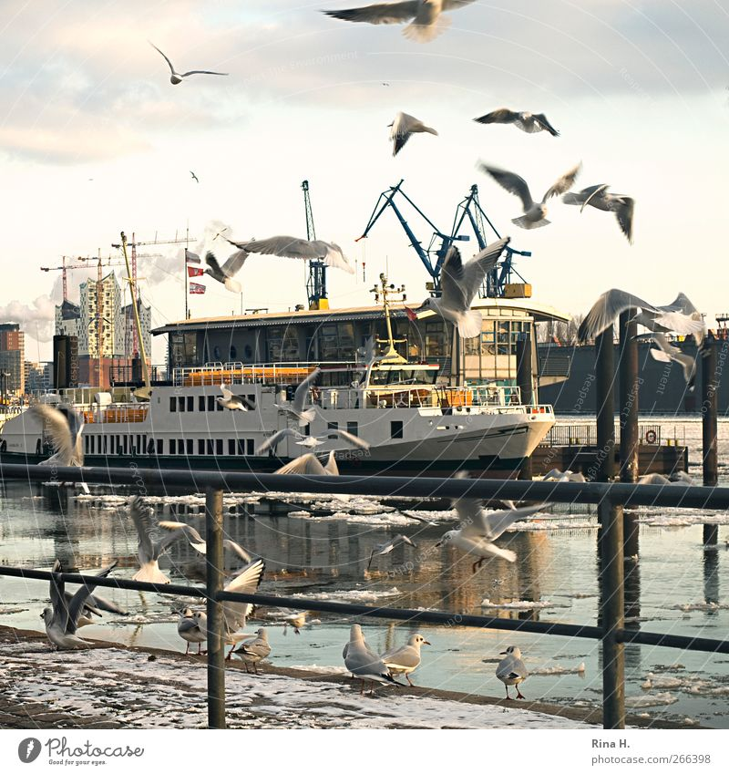 Die schönste Stadt der Welt Winter hell Eis Vogel fliegen Hamburg Frost Fluss Hafen Schifffahrt Schwarm Hafenstadt Städtereise Passagierschiff