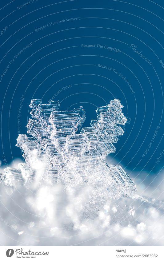 Kristallklar Winter Eis Frost Eiskristall Kristalle Kraft Reinheit kalt Natur Präzision rein gefroren Kristallstrukturen Vergänglichkeit einzigartig Farbfoto